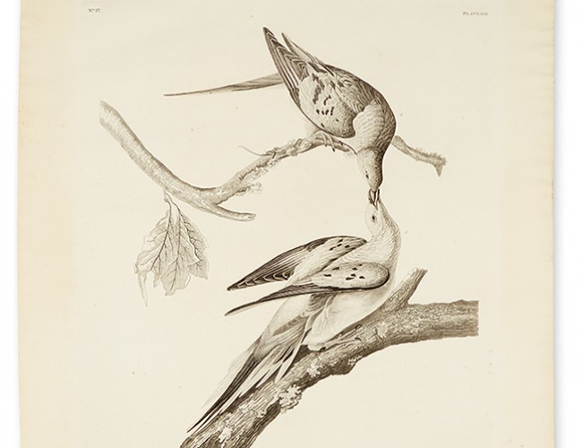 Lot 293: John James Audubon, Passenger Pigeon, Plate LXII, uncolored aquatint and engraved plate, London, 1829. Estimate $8,000 to $12,000.