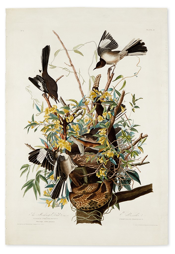 Lot 292: John James Audubon, The Mocking Bird, Plate 21 (Variant 1), hand-colored aquatint and engraved plate, London, 1827. Estimate $7,000 to $10,000.