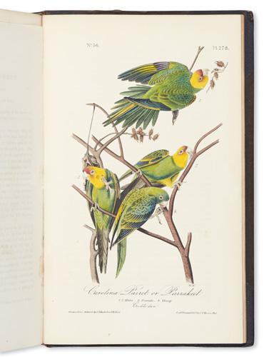 audubon, auction
