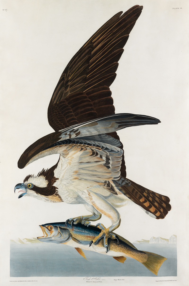 john james audubon, color plate