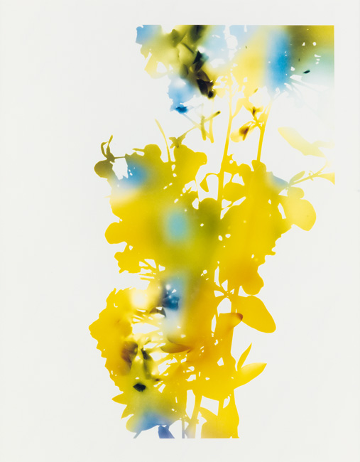 bright yellow and blue abstraction of flora