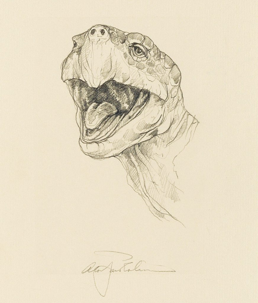 Sketch of the head of a turtle by Alan James Robinson published by the Cheloniidae Press.