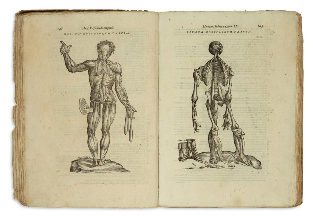 Double-page spread from Anatomia by Andreas Vesalius showing anatomy illustrations.