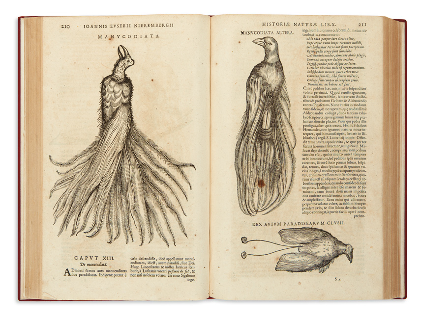 book spread with two illustrations of a bird - natural history of north america, 1635.