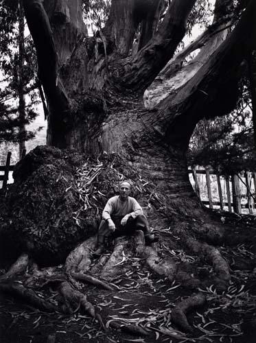 Ansel Adams, Edward Weston, Carmel Highlands, California, silver print, 1945, printed 1974. Edward Weston sitting on a big tree.