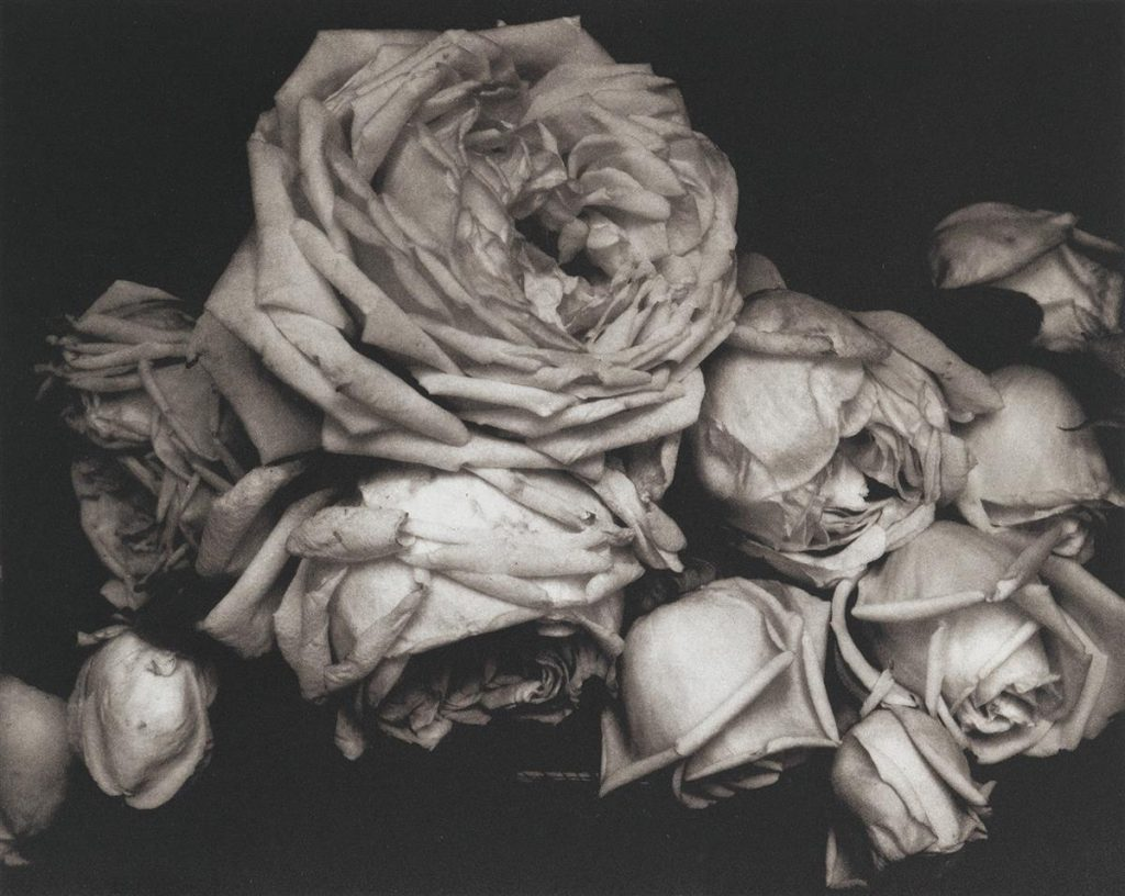 Edward Steichen, Heavy Roses, Voulangis, France, from the portfolio The Early Years 1920-27, 1914